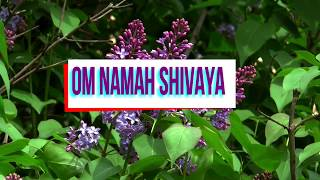 om namah shivaya song and good morning quotes in different style motivational video.