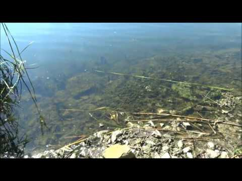 Stanje vode jezera Palić jun 2017