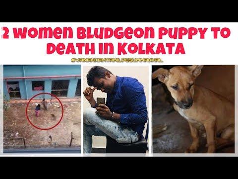 2 women bludgeon puppy to death in Kolkata   கொல்கத்தாவில் கொல்லப்பட்ட 2 பெண்கள் நாய்க்குட்டி Mp3