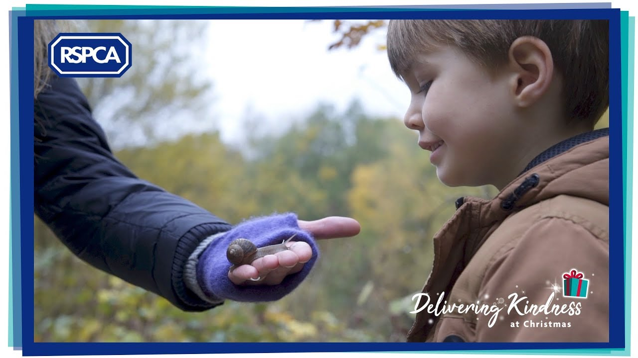 A Little Kindness   RSPCA Christmas Ad 2018   YouTube