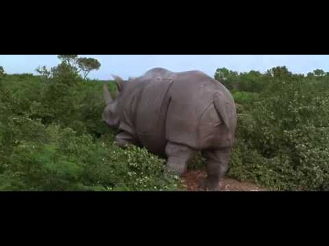 ace ventura rhino scene youtube