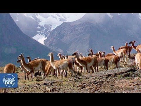 Travel to Chilean Patagonia (Torres del Paine) | Full Docume