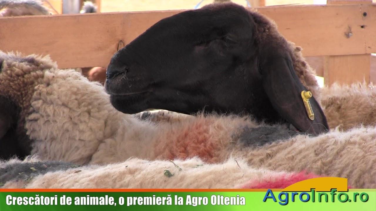 Crescatori de animale, o premiera la Agro Oltenia