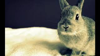 Сколько живут декоративные кролики в домашних условиях в клетке?