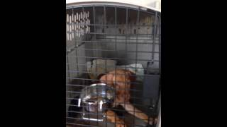 Crate Training 2 General Tips