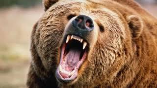 почему медведь  - символ России
