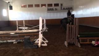 Caliento 3yo stallion hunter prospect --SOLD--