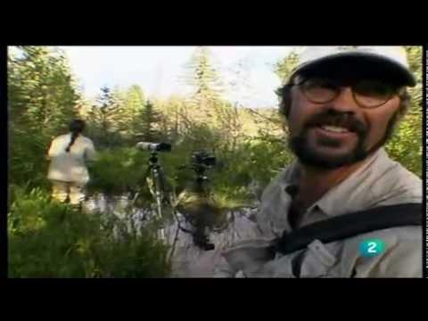 El Bosque Escondido de Yellowstone - Jeff Hogan, Tim Dilworth
