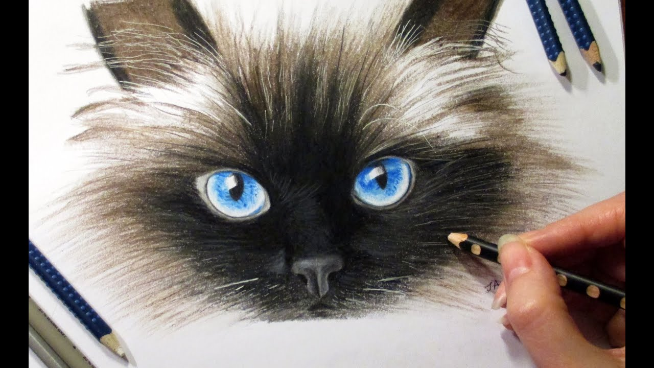 Cat (speed Draw) Youtube How To Draw A Cat Face Easy Solution For How