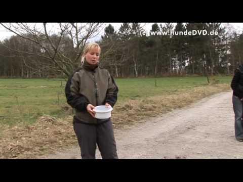 Dummytraining -  Spaß am Aportieren von Imke Niewöhner (c) Hundedvd