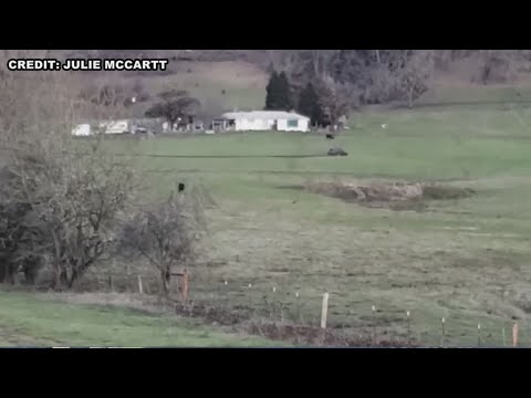 Cort Webber - Crazy shootout in outside Roseburg