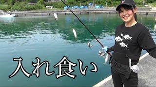 串本町の堤防でのんびりサビキ釣り&泳がせ釣りをしてみたら・・・