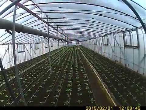 видео: теплица- в гостях Курганинск - Система отопления