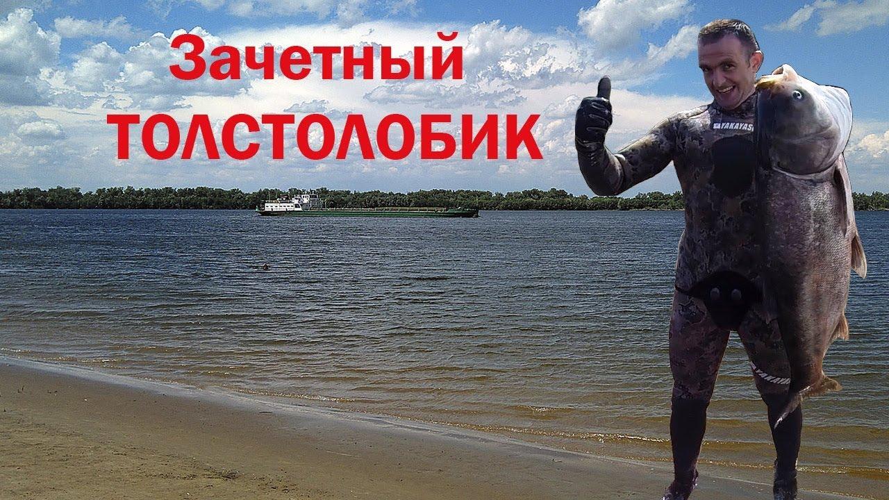 Подводная охота на толстолобика с Максимом Лубягиным.