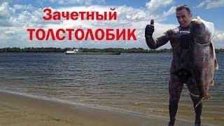 Подводная охота на толстолобика с Максимом Лубягиным