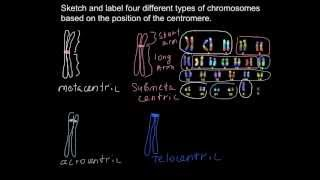 What different types of chromosomes exist?