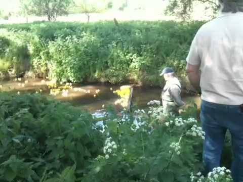 Duck race in Witham Essex