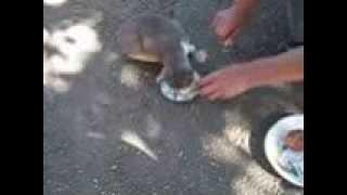 самое смешное видео про собак и кошек.Смешные домашние животные/.fanny animals/