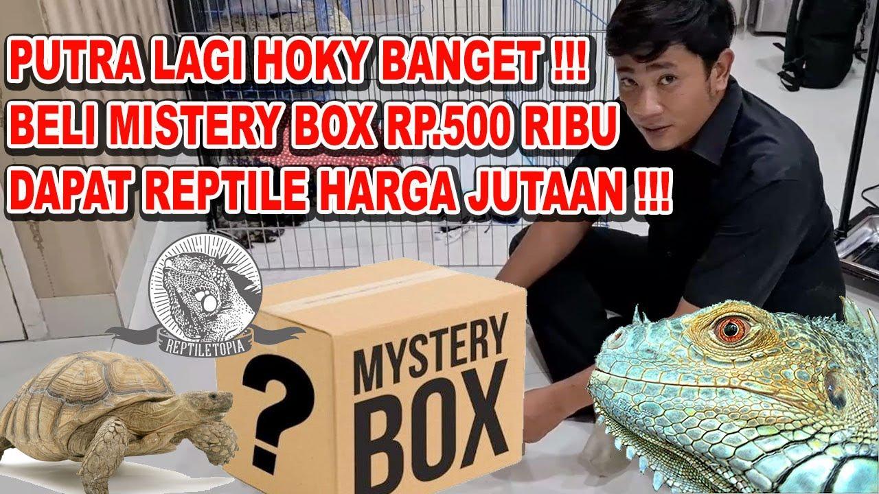 REPTILE MURAH : HOKY BANGET BELI MYSTERY BOX DI @REPTILETOPIA