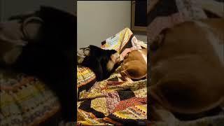 Обезьяна попа собака