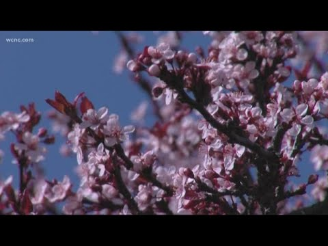 Suffering from spring allergies? Try these tips to find relief