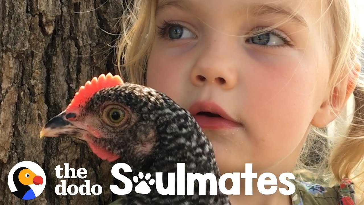 Loyal Chicken Lets Her Favorite Girl Snuggle Her As Tight As She Wants | The Dodo Soulmates