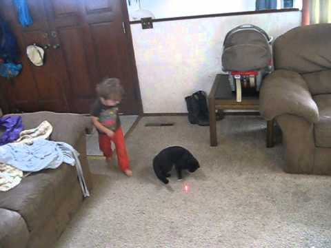 Baby and cat duel for the laser pointer