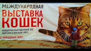 Международная Выставка Котов в Одессе.Реконструкция Потемкинской Лестницы