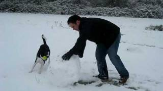 Border collie excited in the snow