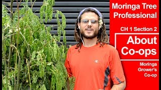 Moringa Tree Professional | Ch 1- About Co-ops (2/7)