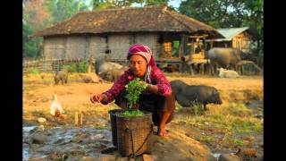 Cheap mobiles drive Myanmar's farming revolution