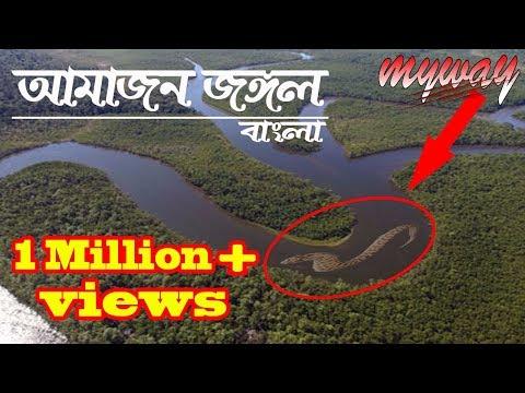 Amazon Jungle || The Amazon Rainforest  || Bengali