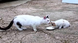 Скетч - Животина #004 - Кошка и котёнок лакают молоко