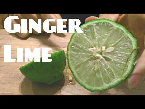 Shatkora Ginger Lime (Citrus macroptera) - Weird Fruit Explorer Ep. 267
