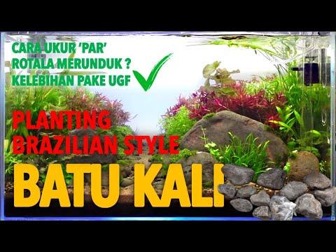 part-2.-simple-aquascape-using-river-stone---planting-brazilian-style-aquascape-batu-kali