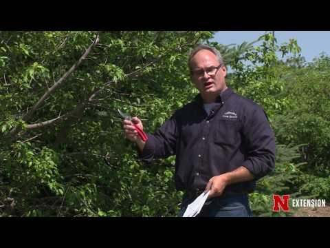 Summer Tree Pruning