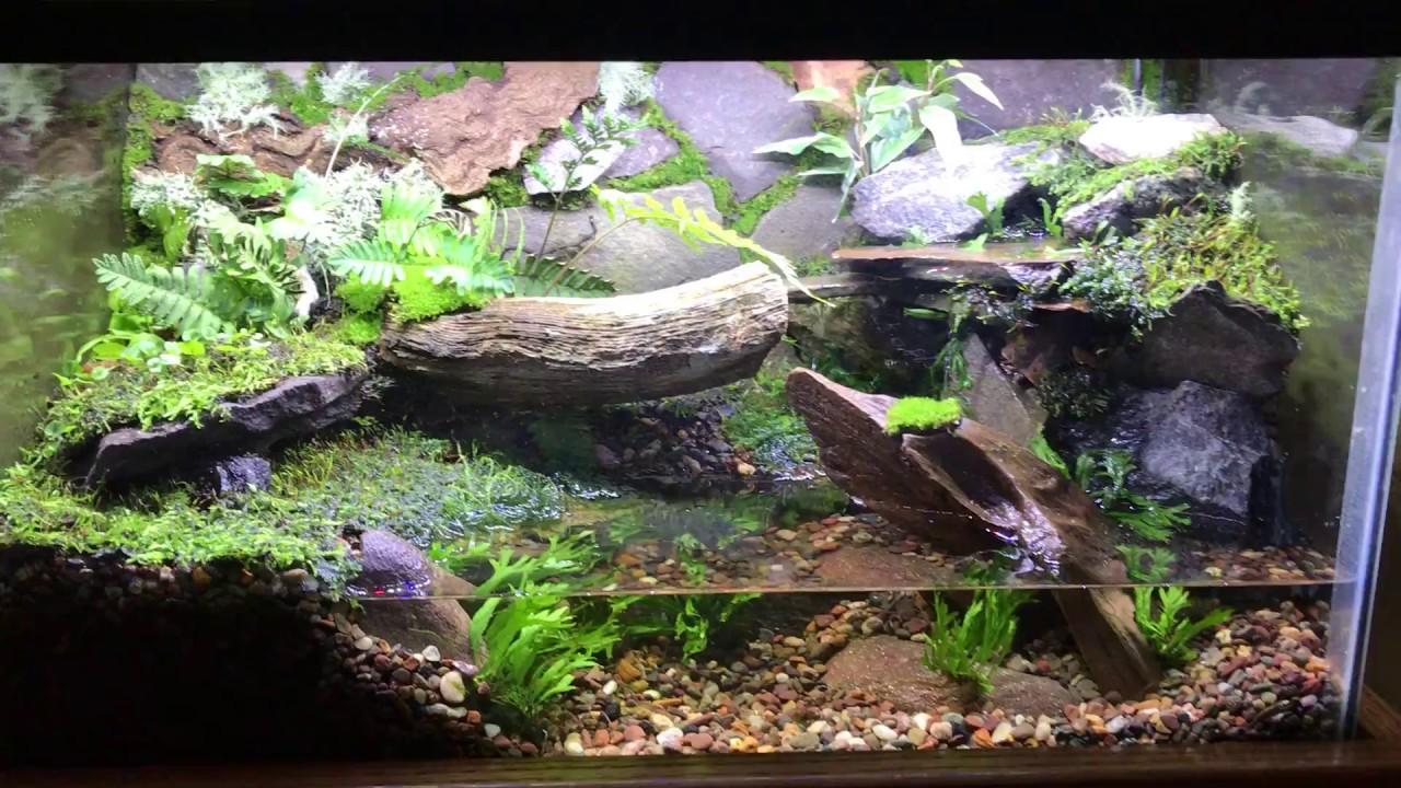 10 gallon paludarium - land/water habitat - YouTube 10 Gallon Paludarium
