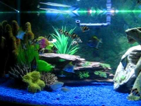 Brackish aquarium fish freshwater tank youtube for Brackish water fish
