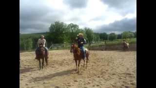 Le Cheval Western, Stage avec Fred Roux préparation au tri de bétail