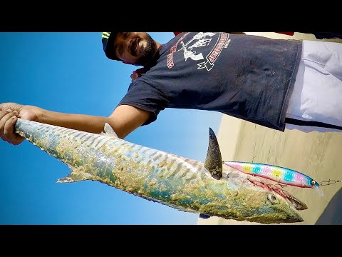 Kingfish from Shore fishing in Qatar - Inland Sea - DMG (Doha Marine Gang)