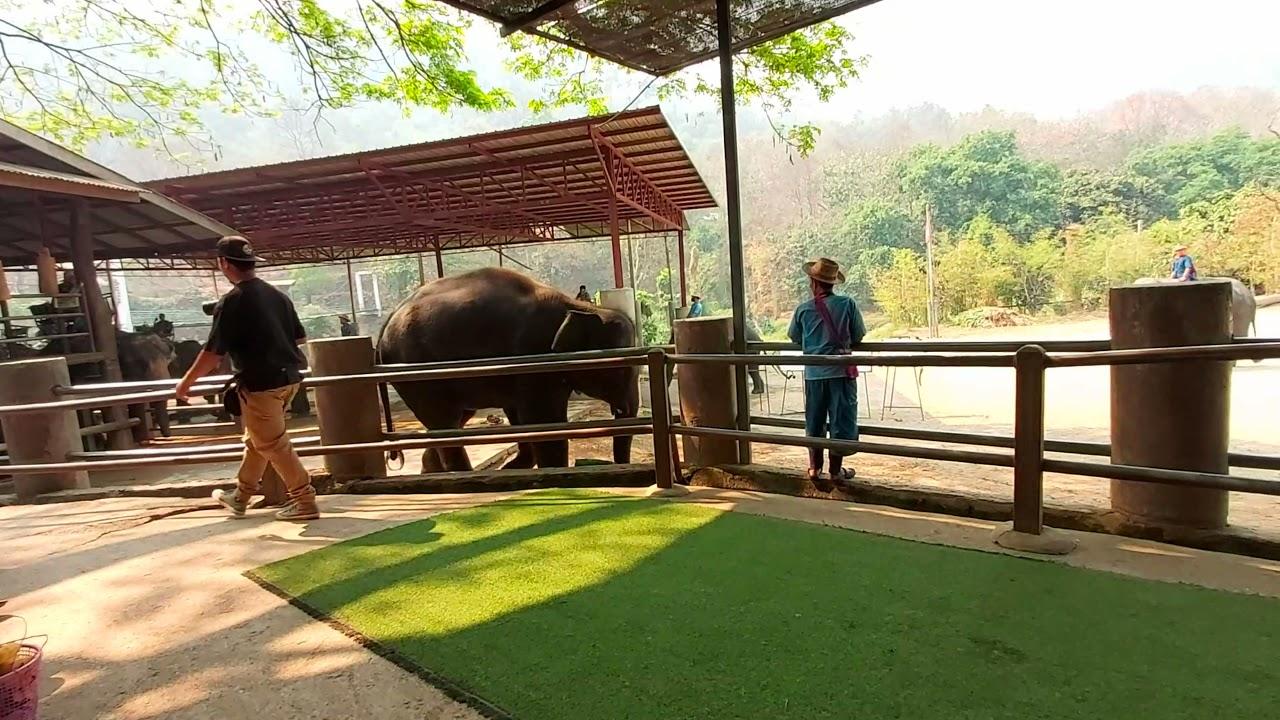 Welcome to Chiangmai elephant show#chiangmaishow