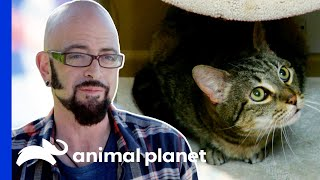 This Cat's Incredible Transformation Surprises Jackson | My Cat From Hell
