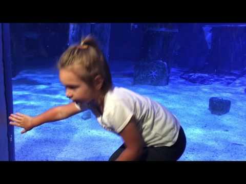 Mystic Aquarium CT - DayTrip - Konjevic Polje
