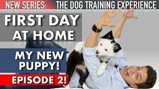 my-new-puppy-the-first-day-home-new-series-the-dog-training-experience-episode-2