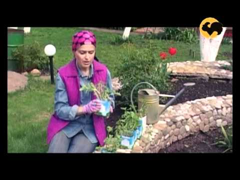 видео: Маленький сад. САД день за днем №2.