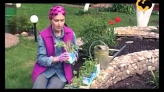 Маленький сад. САД день за днем №2.(Программа посвящена тому, как сделать сад красивым самостоятельно, не затратив при этом много сил, средств..., 2012-06-19T17:26:21.000Z)