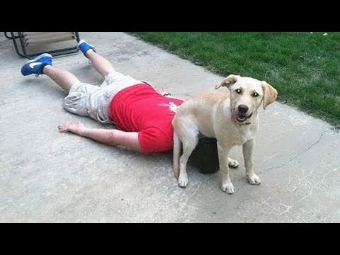 CRAZY & FUNNY ANIMAL VIDEOS 2019 - LAUGH super hard NOW!