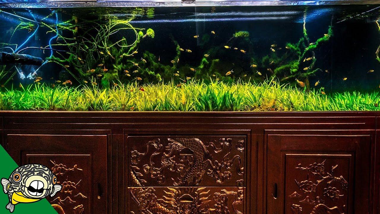 my-230-gallon-low-maintenance-aquarium-6-month-update
