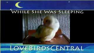 While She Was Sleeping | Squiggy | LoveBirdsCentral #18