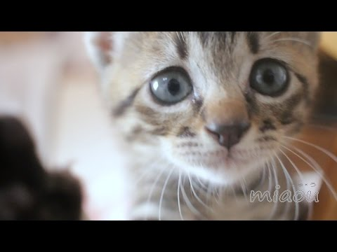 The history of the cat room 猫部屋の歴史 【瀬戸の三毛猫日記】
